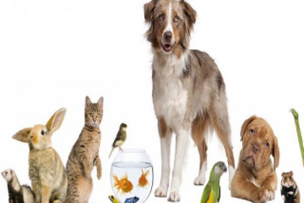 Ветеринарія